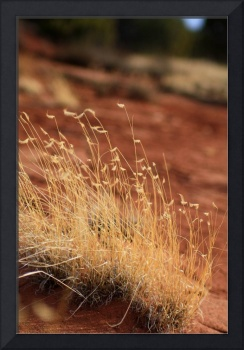 Desert Bunch Grass