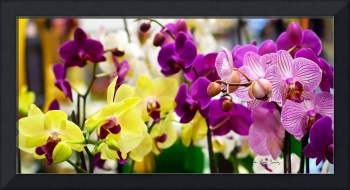Decorative Orchids Still life C82418