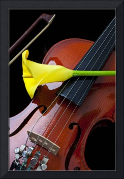 Violin with yellow calla lily