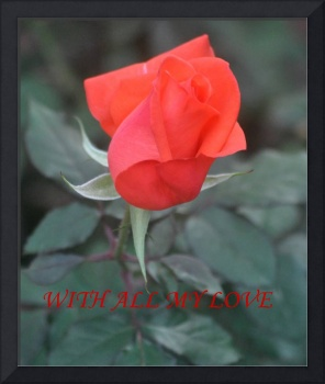 WITH ALL MY LOVE-RED ROSE BUD