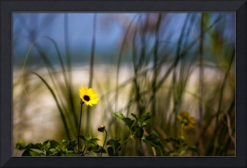 Yellow by the Sand