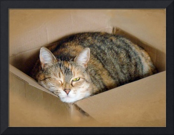 Cat in a Box 2-Lily - With A Wink And A Nod