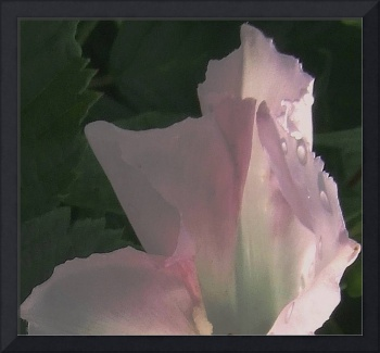 Abstract Flower 1