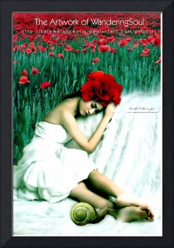 Poppies Memories