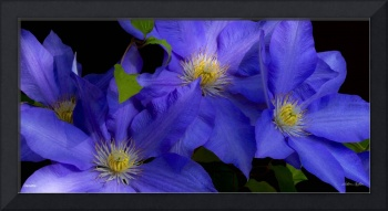 F292-2 Panorama Clematis 30X60 309 megs