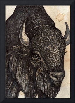 The Black Buffalo