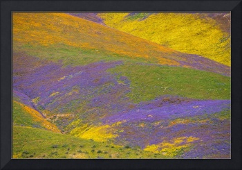 Temblor Mountains Superbloom 2017 Landscape
