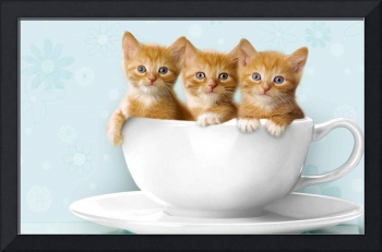 Three Orange Kittens In A White Cup