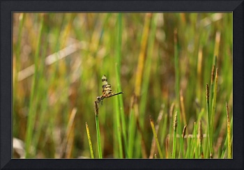 dragonfly in the sunshine