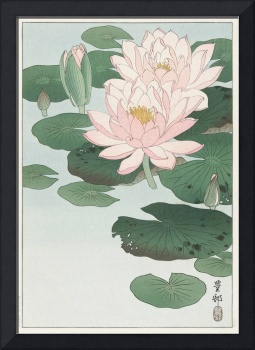 Blooming Water Lily by Ohara Koson