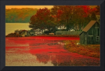 Cranberry Bog Farm in the Fall