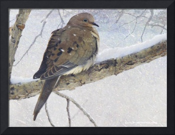 mourning dove in snow3