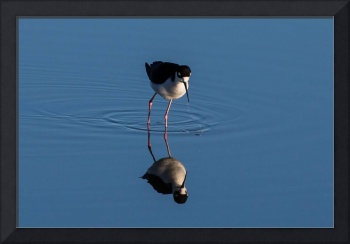 Salton Sea Bird Reflection