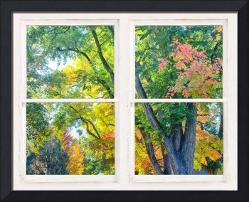 Colorful Forest Rustic Whitewashed Window View