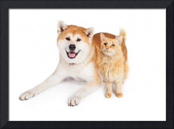 Akita Dog and Tabby Cat