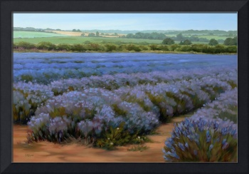 Layers of Lavender