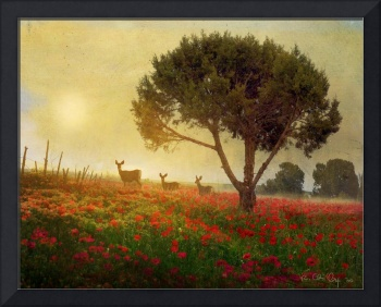 sunset amid the poppies