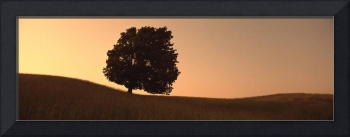Silhouette of a lone tree at dusk