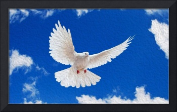 White Dove On Sky