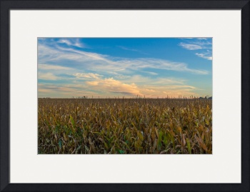 New York Corn Fields by D. Brent Walton