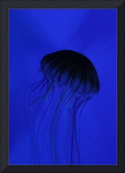 Blue Jelly