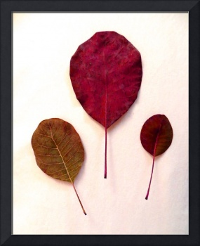 Three_Leaves