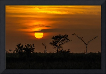 Caribbean Serengeti Sunset