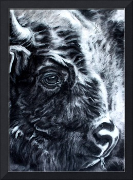 Bison charcoal