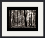 Sacred Grove - Summer, toned b&w by D. Brent Walton