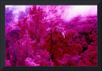 Infrared Primaevel Forest