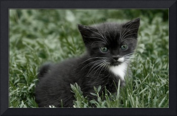 Surprised Black and White Tuxedo Kitten