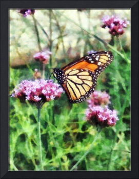 Monarch Butterfly on Pink Lantana