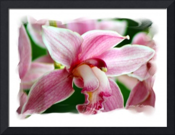Orchid #6