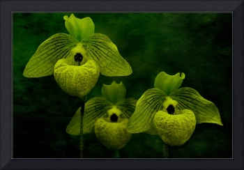Orchid Trio in Green