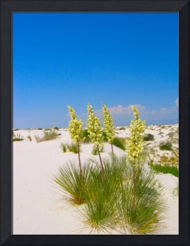White Sands National Monument Flowers in Sand
