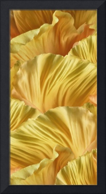 Yellow Poppy Petals