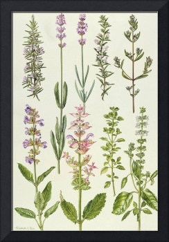 Rosemary and other herbs by Elizabeth Rice