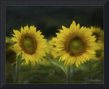 Two Sunflowers Digital Painting