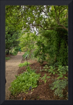 In the Physic Garden, Chelsea 35