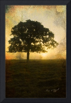 Tree Facing Dawn