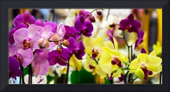 Decorative Orchids Still Life B82418