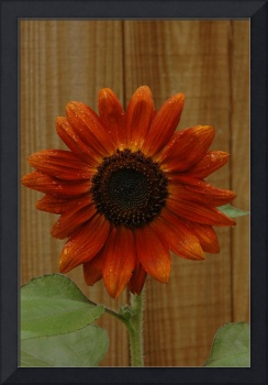 Sunflower III