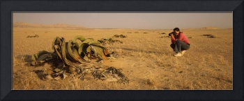 Woman taking picture of a Welwitschia Welwitschia