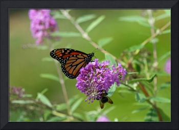 Butterfly Monarch and Bumblebee