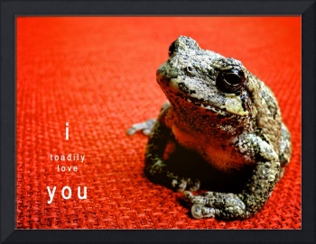 I Toadily Love You
