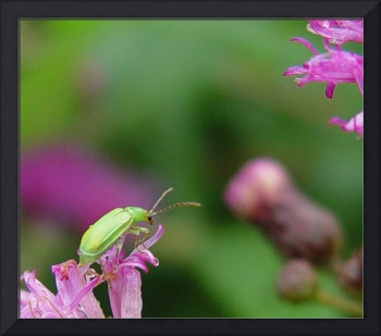 Little Green Bug, Big Pink Flower