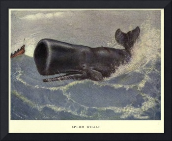 Vintage Sperm Whale Painting (1909)