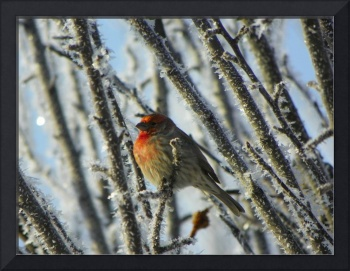 Frosty Winter Morning - Little Bird