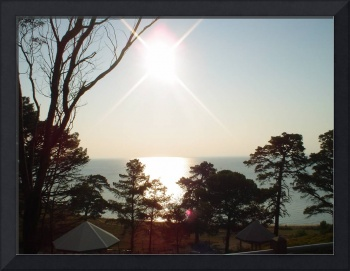 Sun on Sea and Pines