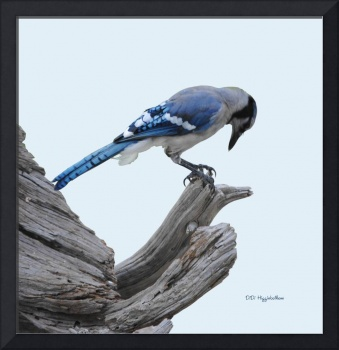 I Paid WHAT For This Pedicure? Blue Jay